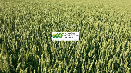 Lettre de l'Académie d'Agriculture de France- n° 32 - Avril 2016